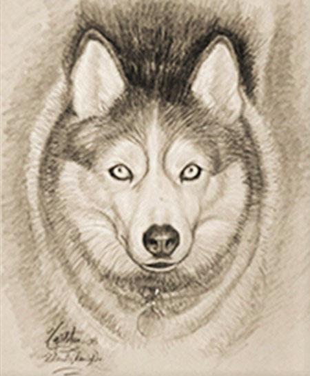 Husky Dog *