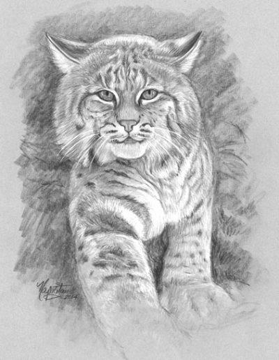 Bobcat  *