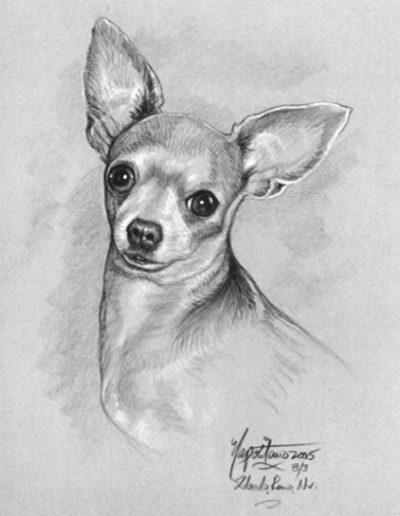 Chihuahua Dog *