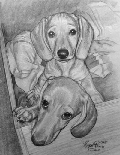 Two Dachshund Pups